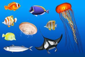 Verschiedene Arten von Meerestieren vektor