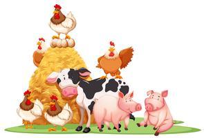 Nutztiere mit Heuhaufen