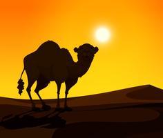 Kamel står på öknen mark vid solnedgången
