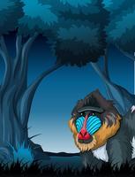 En mandrill i mörk skog