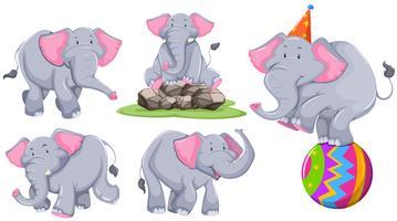 Grå elefant i olika handlingar
