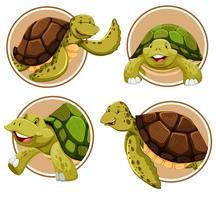 Set Schildkröte Banner vektor