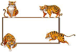 Gränsmall med fyra vilda tigrar vektor