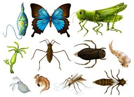 Olika typer av insekter på vit bakgrund