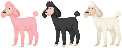Pfützenhunde mit Fell in verschiedenen Farben