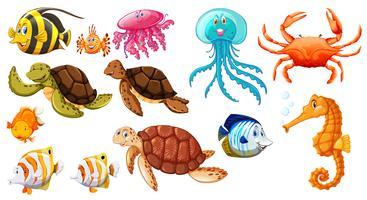 Verschiedene Arten von Meerestieren