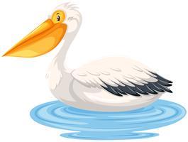 Pelican sitter på vatten