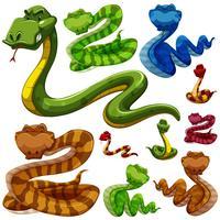 Sats av olika typer av ormar