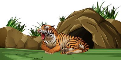 Tiger sover framför grottan