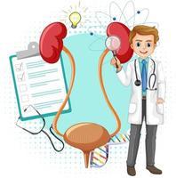 Arzt und menschliche Niere und Blase auf weißem Hintergrund vektor