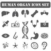 Symbole für menschliche Organe vektor