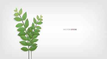 grüne Blätter und Äste. vektor