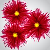 Färgglada exploderar / blommor, vektor illustration