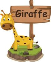 Tieralphabetbuchstabe g für Giraffe vektor