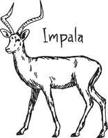 Impala - Vektor-Illustration Skizze handgezeichnete vektor