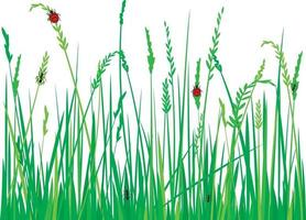 Gras mit Marienkäfern vektor