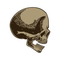 Skelettkopf Anatomie Tinte handgezeichnete Gravur vektor