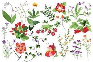 Blumen und Pflanzen isoliertes Set vektor