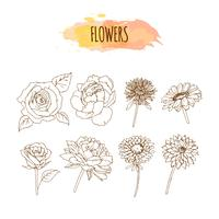 Hand gezeichneter Blumen-Satz. Blumenillustration.