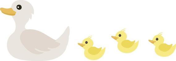 süße Entenküken nach Mama Ente. Schwäne, isoliert auf weiss. vektor