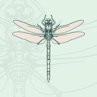 Hand gezeichnete Gekritzelskizze der grafischen Illustration der Libelle. vektor
