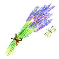 Gäng lavendelblommor vektor
