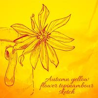 Hand gezeichnete gelbe Blume Topinambour-Skizze vektor