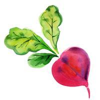 Rote Beete mit Blättern