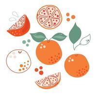 Satz handgezeichnete flache Grapefruits oder Orangen. moderne Abbildung. vektor