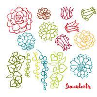 Succulents set i handen ritar stil.