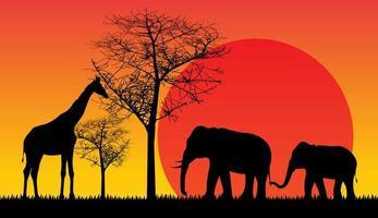 Wildtiere Safari Sonnenuntergang vektor