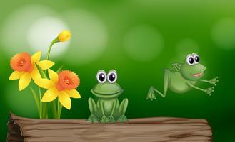 Två gröna grodor på stocken
