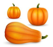 Set realistischer Kürbisse in verschiedenen Formen Halloween Thanksgiving vektor