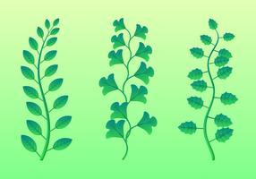 Grün lässt gesetzten Vektor Clipart