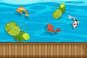 Drei Fische und Wasserlilie im Teich