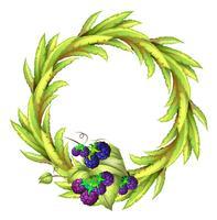 Die violetten Beeren am unteren Rand einer grünen, runden Grenze