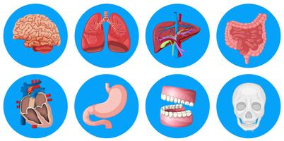 Mänskliga organ på rund emblem