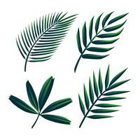 Tropiska Palm Green Leaves Clipart Set Vector