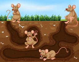 Råttfamilj som bor under jord vektor