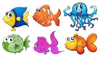Fünf verschiedene Meereslebewesen