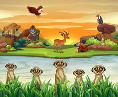 Vilda djur vid floden