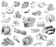 eine Reihe von handgezeichneten Skizzen von Gemüse. Vintage-Skizzenelemente für Etiketten, Verpackungen und Kartendesign. vektor