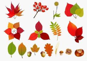 Herbstblätter Vector Pack