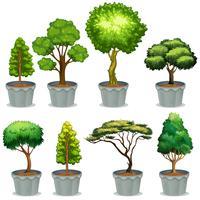 Topfpflanzen vektor