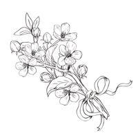 Blühender Baum Hand gezeichneter botanischer Blütenniederlassungsblumenstrauß auf weißem Hintergrund. Vektor-Illustration