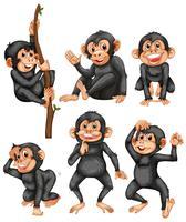 Ein Satz des Affen auf weißem Hintergrund vektor