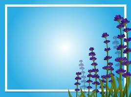 Gränsmall med lavendelblommor vektor