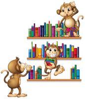 Affen und Bücher vektor