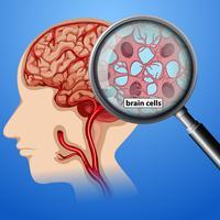 Anatomie der menschlichen Gehirnzellen vektor