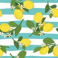 Seamless mönster av grenar med citroner, gröna blad och blommor på blå. Citrusfrukter bakgrund. Vektor illustration